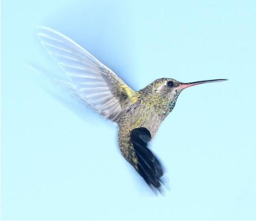 Google-Hummingbird
